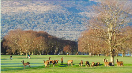 Irish Golf